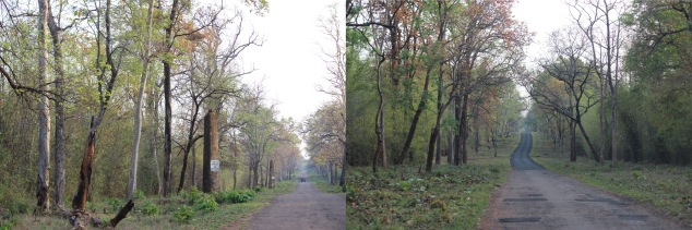 Pillars from World War II   |   Colourful hues at Tadoba